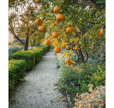 Voyage olfactif Au jardin des Hespérides