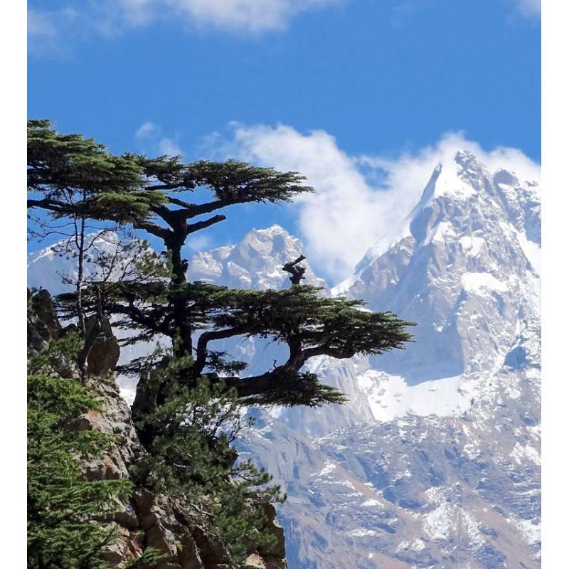 Voyage olfactif Randonnée au Népal