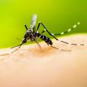 Aroma Senteur Stop moustiques