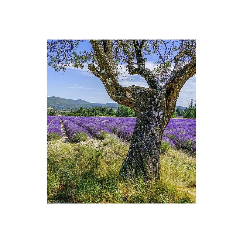 Voyage olfactif Un été en Provence