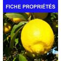 """Citronnier """"zestes de citron"""""""