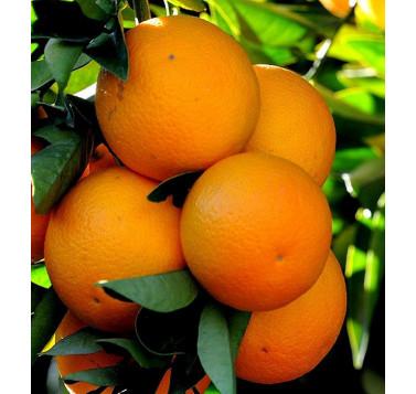 Orange douce